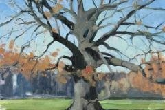 Naked-Oak-Ruskin-Park