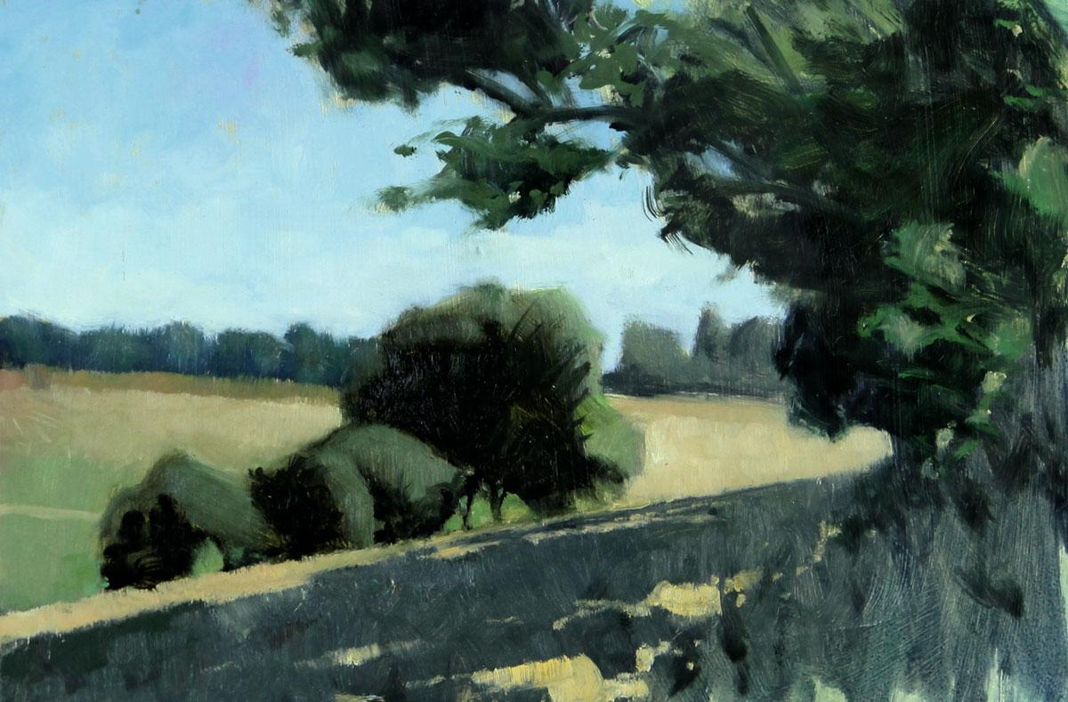 Slanting-shadows-and-trees